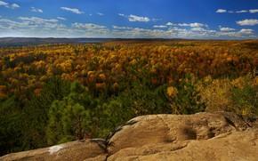 Картинка осень, деревья, пейзаж, природа