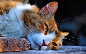 Картинка мордочка, лежит, пушистая кошка