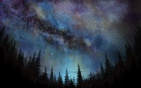 Картинка небо, ночь, ели, звездопад, Tea Taster