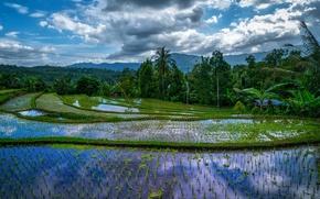 Картинка зелень, лес, вода, облака, деревья, горы, тропики, пальмы, Индонезия, плантация, Bali