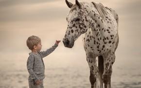 Обои мальчик, фон, конь