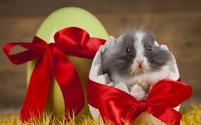 Картинка кролик, лента, праздник, яйцо