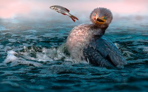 Картинка море, птица, ситуация, рыба, добыча, баклан