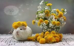 Картинка цветы, вишня, морская свинка, одуванчики, пушинки