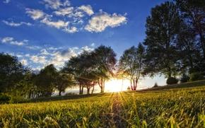 Картинка солнце, деревья, природа, утро