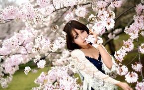 Картинка взгляд, девушка, Сакура, восточная