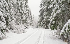 Картинка зима, дорога, лес, снег, деревья, ели, Washington, штат Вашингтон, Olympic National Forest, Национальный лес Олимпик