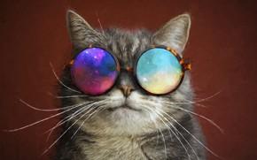 Картинка очки, усы, кот