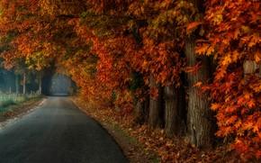 Обои парк, туман, дорога, деревья, листья, аллея, осень, лес