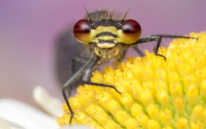 Картинка цветок, глаза, макро, желтый, фон, лапки, стрекоза, мордочка, насекомое