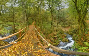 Обои лес, осень, Лайенкауль, Leienkaul, река, Rhineland-Palatinate, листья, Рейнланд-Пфальц, деревья, Германия, Germany, мост, парк