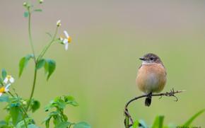Картинка цветы, птица, ветка, кроха