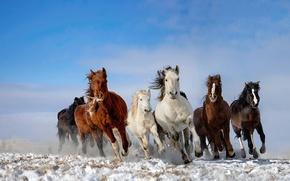 Картинка небо, снег, лошади, табун