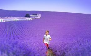 Картинка поле, цветы, природа, мальчик, лаванда