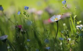 Обои цветы, трава, лето