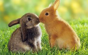 Обои животные, кролики, любовь