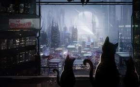 Обои кошки, ночь, город, Mammia