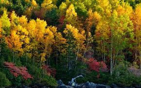 Картинка осень, лес, деревья, река, камни, берег, желтые, солнечно, красочно