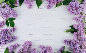 Картинка цветы, ветки, весна, цветение, wood, blossom, flowers, сирень, spring, violet, lilac