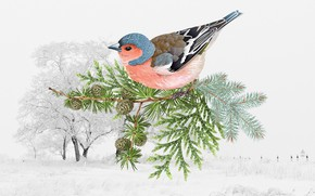 Обои зима, птица, птичка
