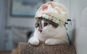 Картинка кот, шапка, котик, милашка