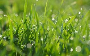 Картинка зеленый, капли, трава