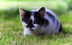 Обои трава, малыш, котёнок