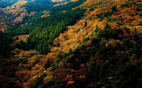 Картинка осень, лес, деревья, Япония, вид сверху, Nara Park