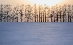Картинка зима, свет, снег, деревья