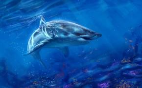 Картинка океан, рыба, акула, AlaxendrA