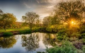 Картинка деревья, закат, пруд, Англия, Petersfield