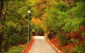 Обои Осень, Деревья, Фонари, Fall, Дорожка, Autumn, Colors, Road, Trees