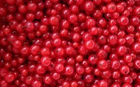 Картинка ягоды, текстура, красная смородина, кисленько