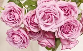 Обои бутоны, куст, roses, розовая, pink, розы, flowers, цветы