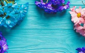 Картинка цветы, весна, colorful, доска, хризантемы, wood, blue, flowers, spring, decoration