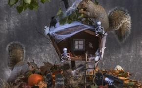 Картинка осень, листья, избушка, тыква, Хеллоуин, птичка, белки, скелетики