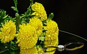 Картинка цветы, часы, хризантемы