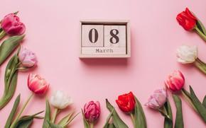 Картинка цветы, colorful, тюльпаны, розовые, white, белые, fresh, 8 марта, pink, flowers, beautiful, tulips, spring, purple, …