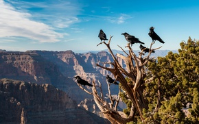 Картинка горы, птицы, дерево