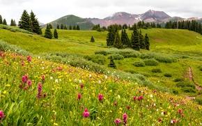 Картинка зелень, лето, трава, деревья, цветы, горы, поля, США, луга, Colorado