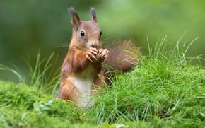 Картинка орех, трава, гармония, зелень, красотка, белка, фотомодель, природа, маникюр, правильное питание