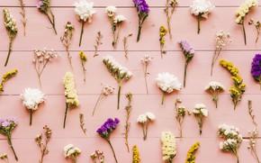 Картинка цветы, фон, colorful, wood, flowers, background, pattern