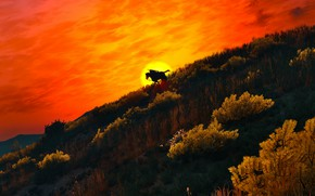 Картинка пейзаж, всадник, The Witcher 3, Wild Hunt