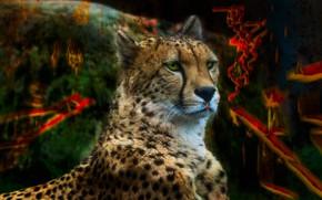 Картинка взгляд, морда, цвета, кошки, абстракция, фон, краски, портрет, обработка, пятна, гепард, ярко, дикие кошки