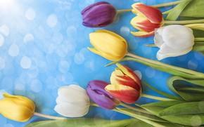 Картинка цветы, colorful, тюльпаны, fresh, flowers, beautiful, tulips, spring