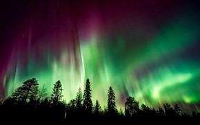 Картинка лес, небо, деревья, ночь, северное сияние, силуэты