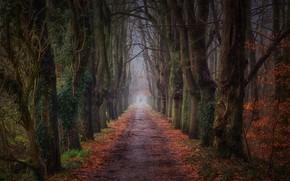 Картинка дорога, лес, пейзаж, природа, красота