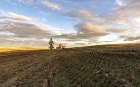 Картинка поле, свет, природа, дом, дерево, утро, Eastern Washington