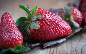 Картинка макро, крупный план, ягоды, фон, еда, клубника, крупно, деревянный, кора, семечки, фотосессия, сочно, композиция, блестит