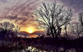 Картинка ночь, река, камыш